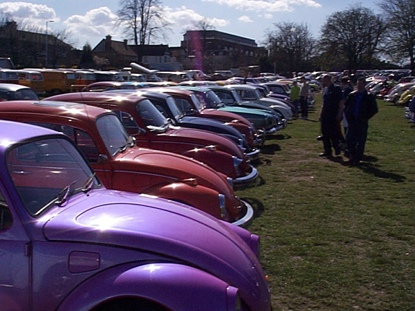 Long row of Beetles